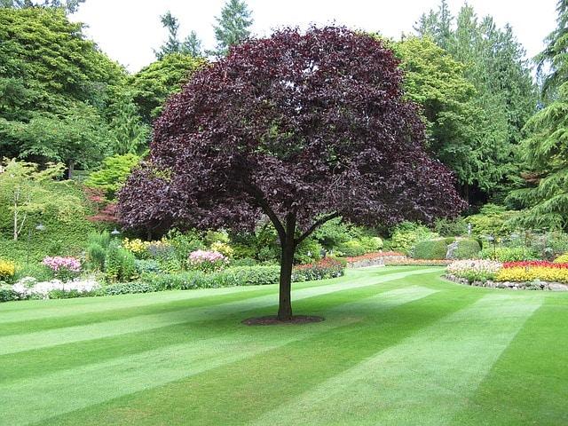 Arbol en The Butchard Gardens, en Vancouver