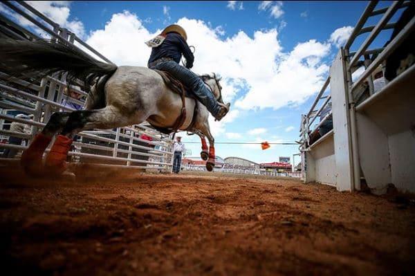 El caballo en la Estampida de Calgary