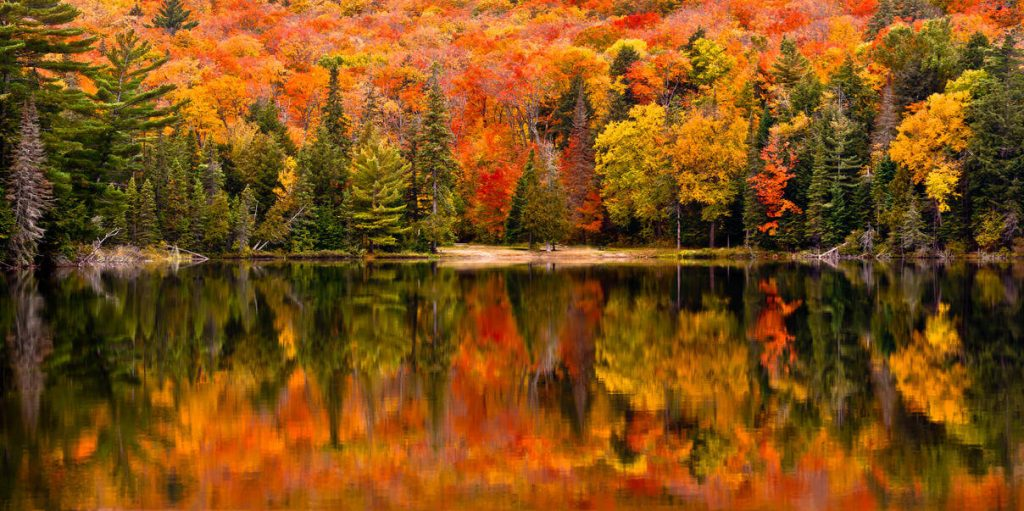 Canada Wood Reflection